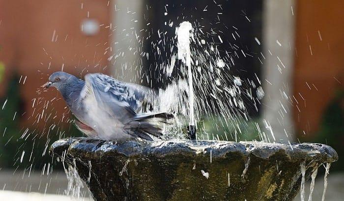bird-bath-mosquito-control