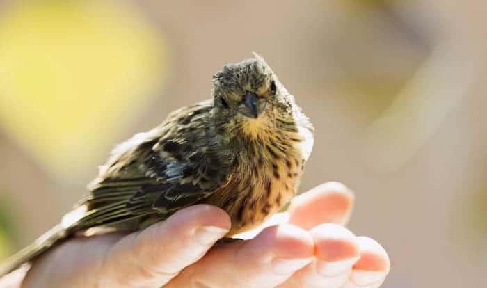 bird-pooping-on-you