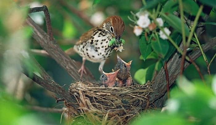 baby-bird-is-called