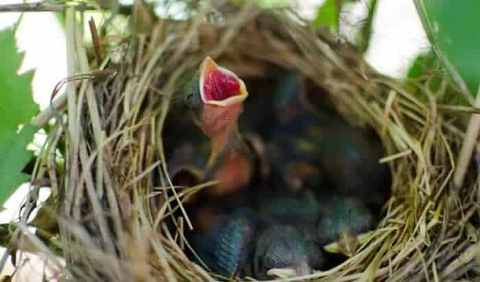 feed-baby-birds