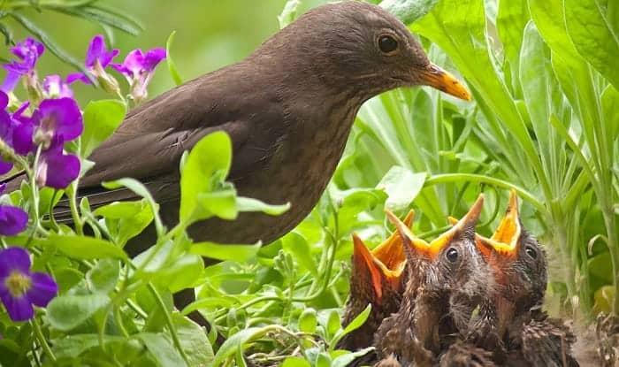 fledgling-bird-care
