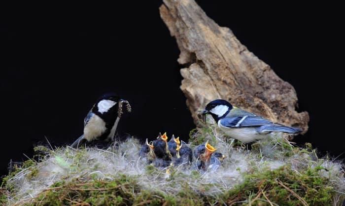fledglings-eat