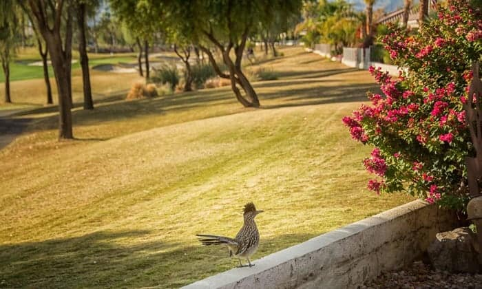how to attract roadrunners to your yard