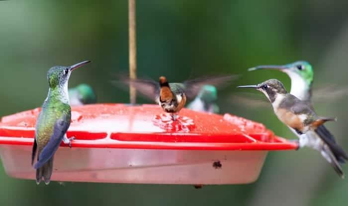 keep-ants-away-from-hummingbird-feeder