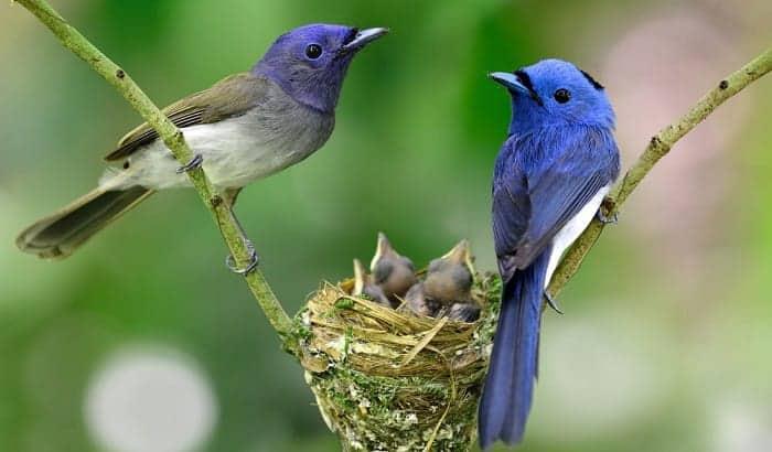 name-for-a-baby-bird