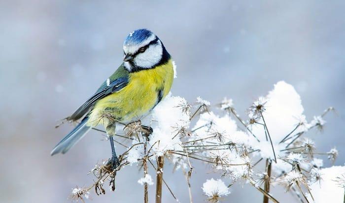 bird-lifespan