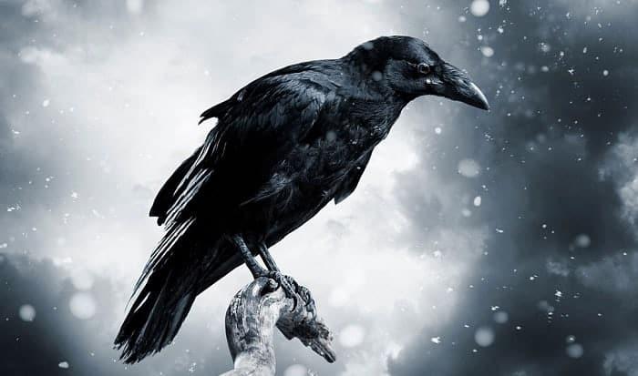 crow-repellent