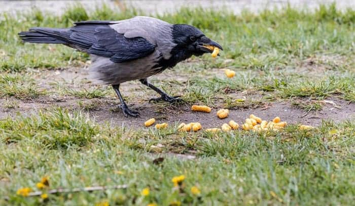 how to keep crows away from bird feeders
