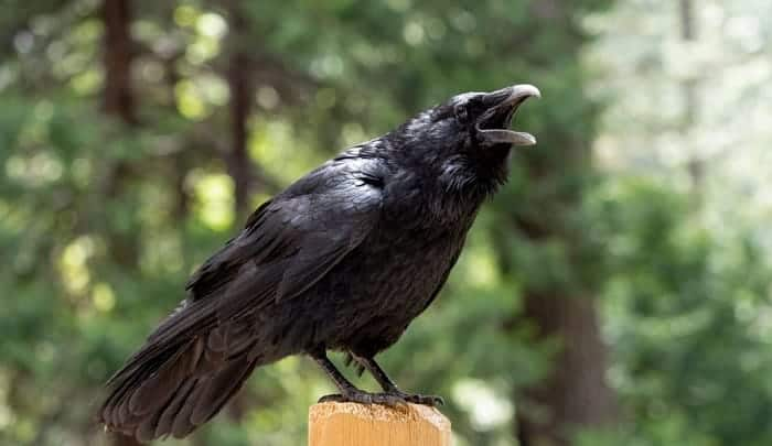scare-crows-away