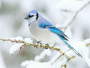 3-letter-bird-names