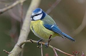 a-3-letter-flightless-bird