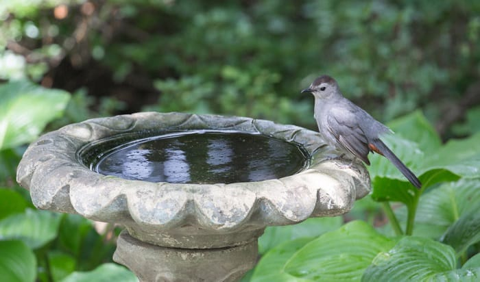 clean-bird-bath-vinegar