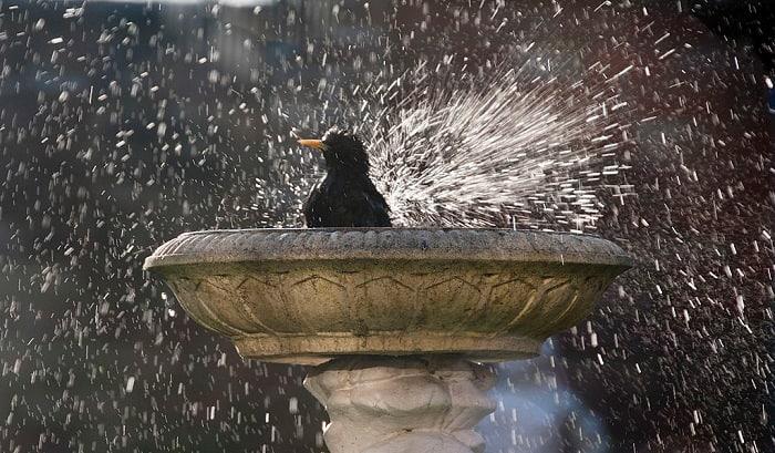 cleaning-bird-bath-with-vinegar