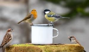 four letter birds names