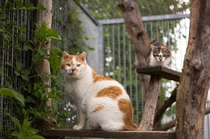 get-rid-of-birds-nesting-on-porch