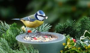 how long can birds go without food