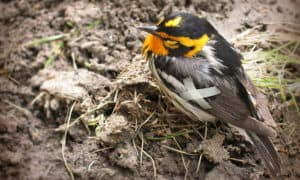 how to help a bird with a broken wing