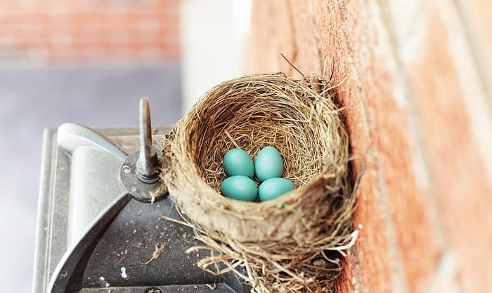 how to keep birds from nesting on porch
