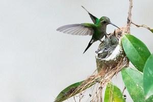 hummingbirds-fight-over-the-feeder