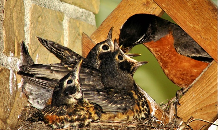 keep-birds-from-building-nests-on-porch